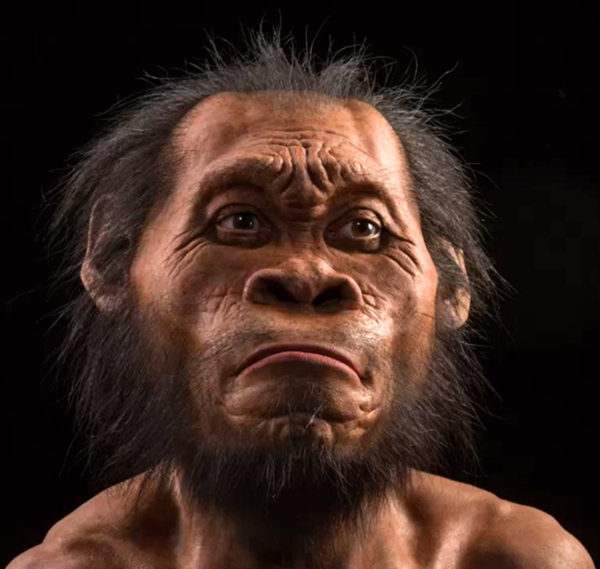 Recreation of Homo Naledi from a Skull